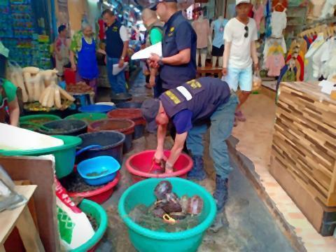 pict-Turtle Sellers Arrested.jpg