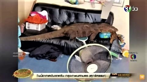 pict-giant Monitor Lizard.jpg