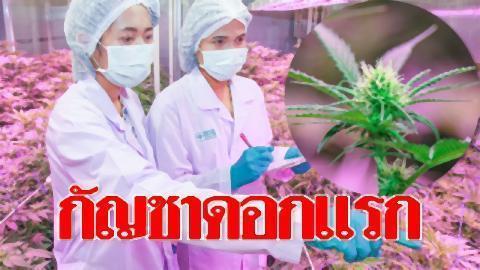 pict-medical marijuana.jpg