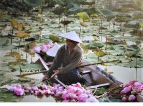 pict-pict-DSCN3880蓮の花.jpg