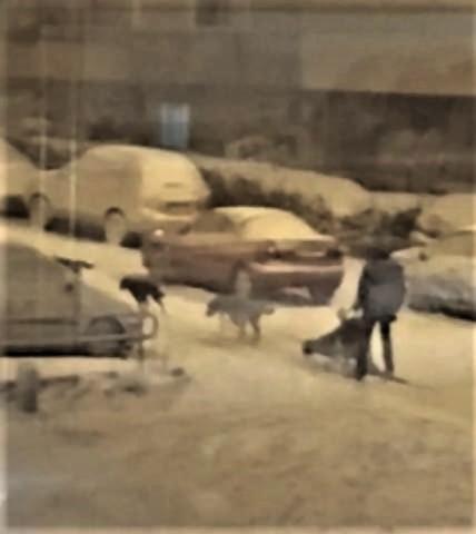 pict-pict-スペイン人「数十年ぶりの大雪4.jpg