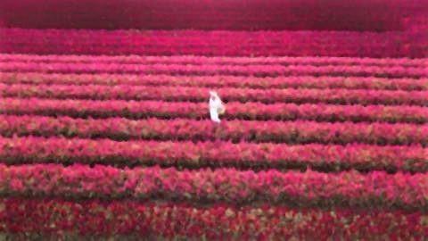 pict-pict-I love flower Farm1.jpg