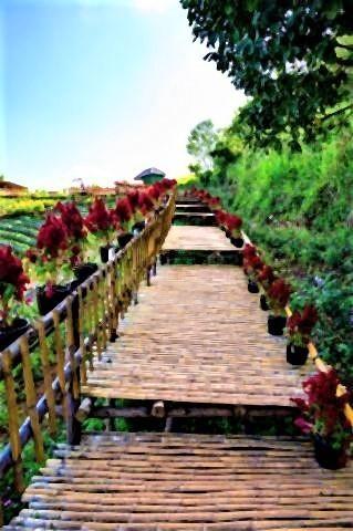 pict-skywalk-beautiful-park.jpg